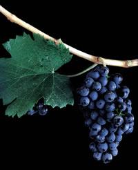 Foto: Wines of Argentina