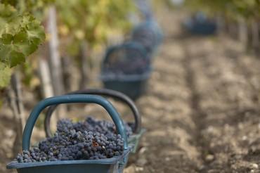 Colheita Bordeaux