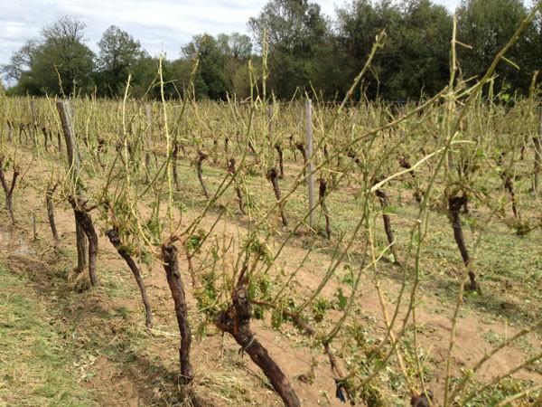 Bordeaux granizo