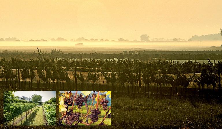 Alois Kracher foi um dos pioneiros na Áustria ao reconhecer o potencial do terroir local para a produção de vinhos doces excepcionais