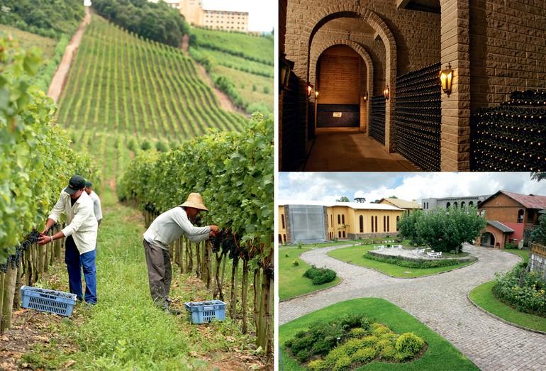 As vinícolas Geisse, Miolo e Valduga são três das de maior prestígio no Brasil, produzindo alguns dos melhores vinhos no mercado