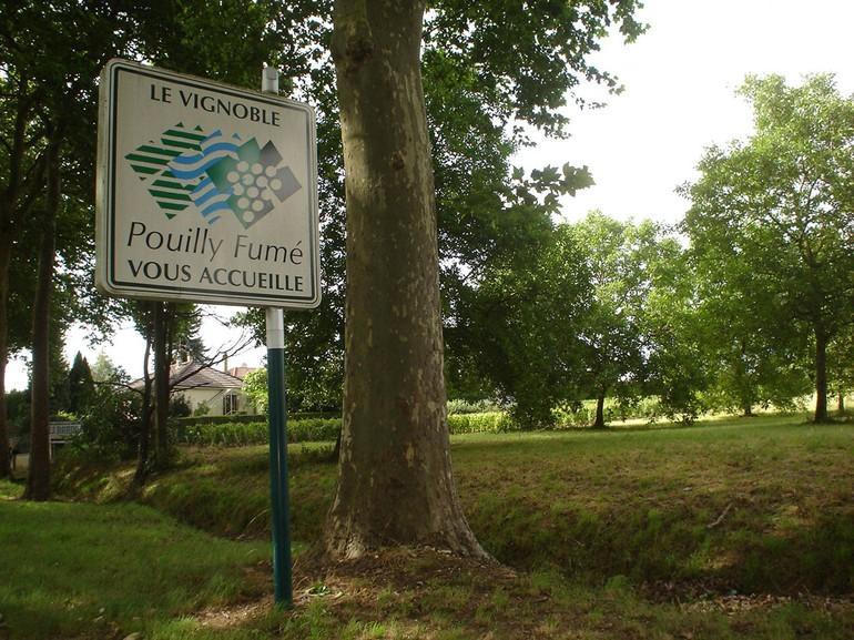 A AOC de Pouilly-Fumé foi estabelecida em 1937 e é baseada somente em Sauvignon Blanc