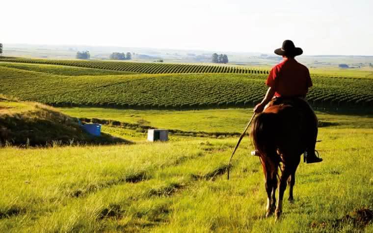 Venda de vinhos brasileiros cresce 34% no primeiro quadrimestre de 2021