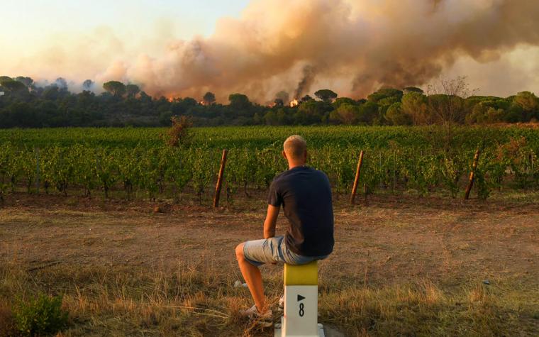 Produtores de Provence contabilizam prejuízo causado pelo fogo, mas mantêm esperança por boa safra