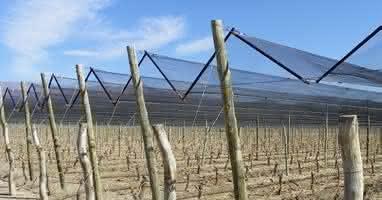 França adota medida para evitar prejuízos em vinhedos · Revista ADEGA