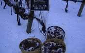 Você conhece os 'vinhos de gelo'?