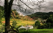 Brasil ganha nova rota de vinhos orgânicos